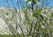 PRINPTEMPS MEDIEVAL - DU 10 AU 22 AVRIL 2020